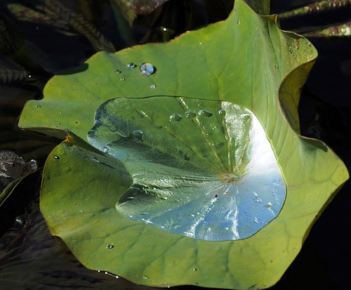 Puddle in Leaf