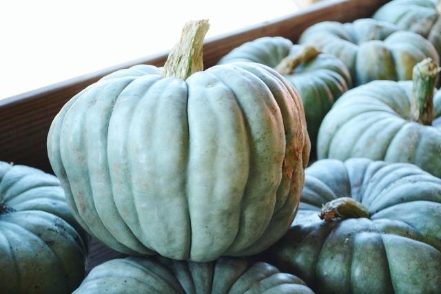 jarhdale pumpkin