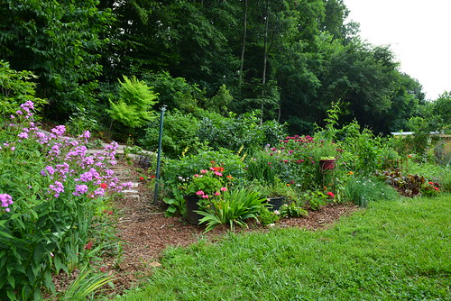 Image of a conservation landscaping garden in a Montgomery County backyard.