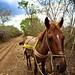 Cenote Transportation por Call Me Ashmael