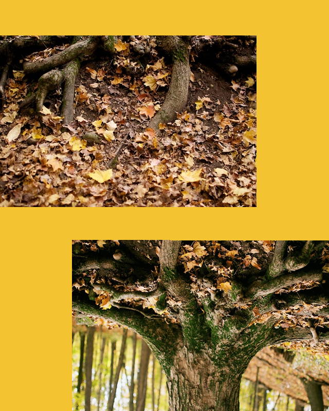 diptych experiment 1