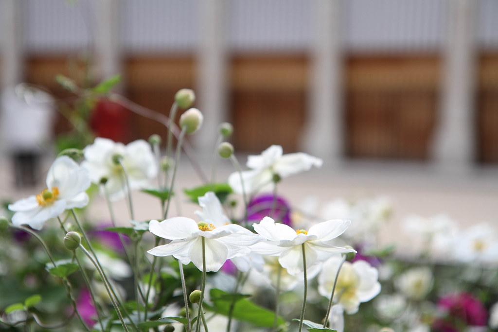 Palais Royal flowers