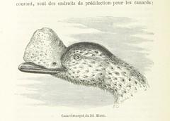 Image taken from page 194 of 'Découverte de l'Albert N'yanza ... Ouvrage traduit ... par G. Masson. Illustré ... et accompagné de 2 cartes'