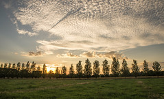 Sunset @ farm