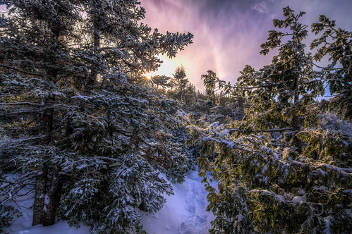 sun ontario canada forest bruce halo peninsula tobermory