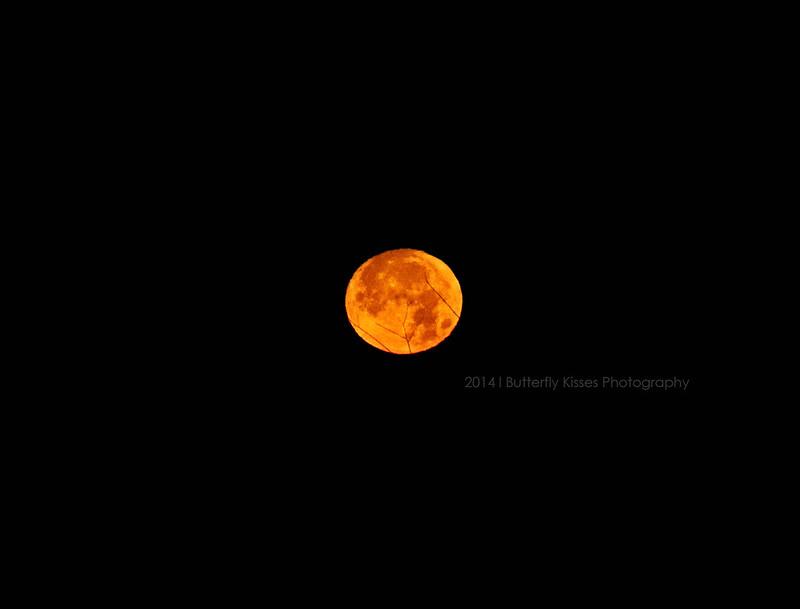 moon-0011 web