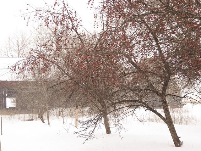 farmette winter-13.jpg