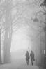 Foggy Walk by alopecosa