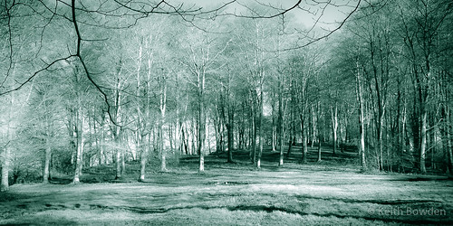 woodland woods trees shadows eerie fantasy fairytale bw colourcast splittone vignette legend mystery dragon myth history ironage archaeological site blackandwhite enchanted forest spooky folklore monochrome explore teal ruby10 mythsandfairytales