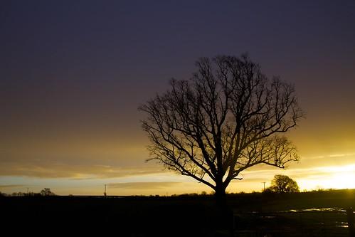 morning winter sky cloud storm tree sunrise dawn day glow alba