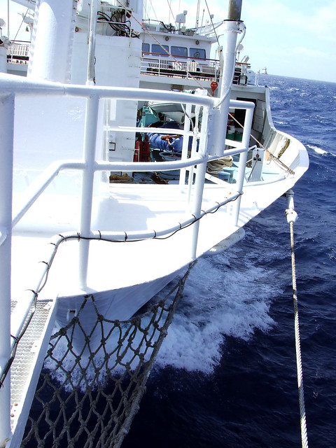 Header of sea day