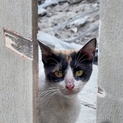 #cool #cat #in #bahrain #peeping #tom #building in #Muharraq