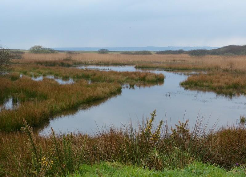 P1070333 - RSPB Marazion Marsh