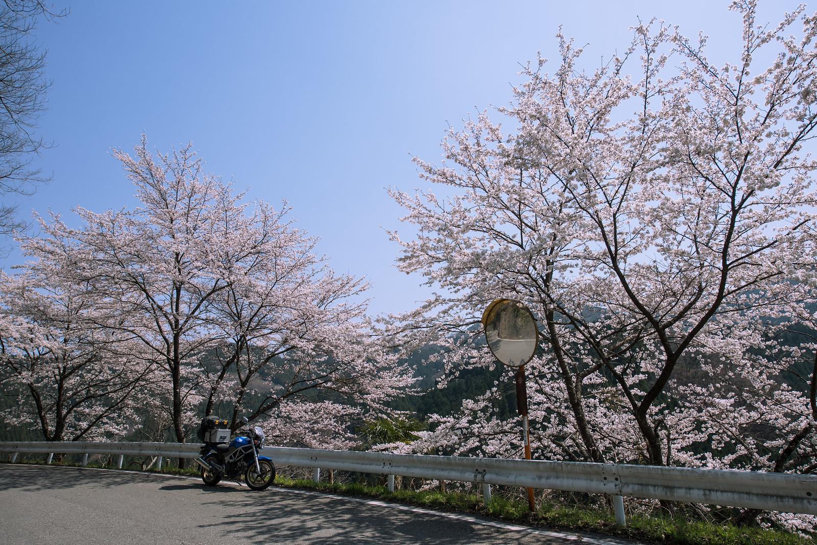 桜ツーリング 富岡~神流