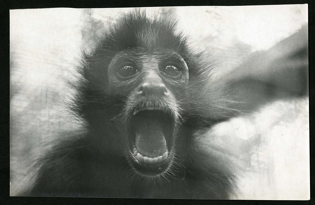 Primate, 1960