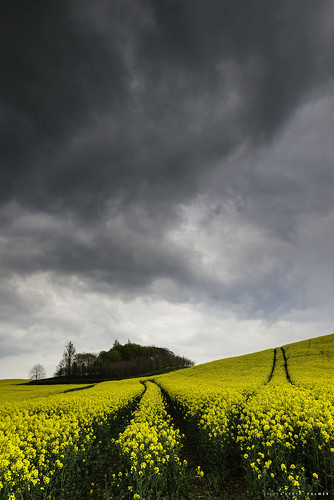 uk sky colour nature yellow clouds spring nikon skies overcast april staffordshire rainclouds uttoxeter rapeseed gbr nikkor2470f28 threeshiresphotographers d800e nikond800e stowbychartley