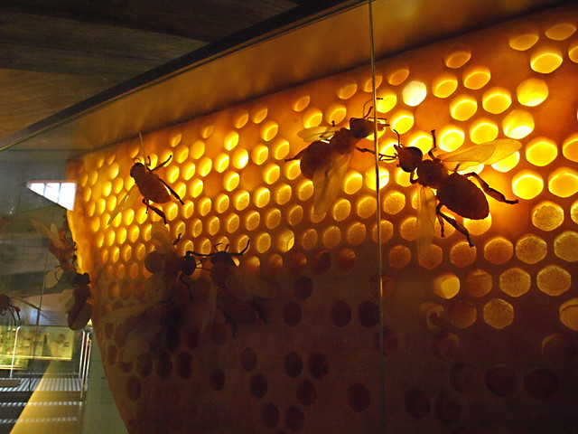 Museum of wine & honey, El Sauzal