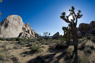 Joshua Tree National Park, CA | Roland Krinner