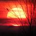 IMG_2110 Sunset birdie - IN EXPLORE #45 by pinktigger