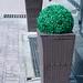 Green bush pot at hotel garden in sunny day