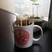 20160620_150106 UCC Coffee