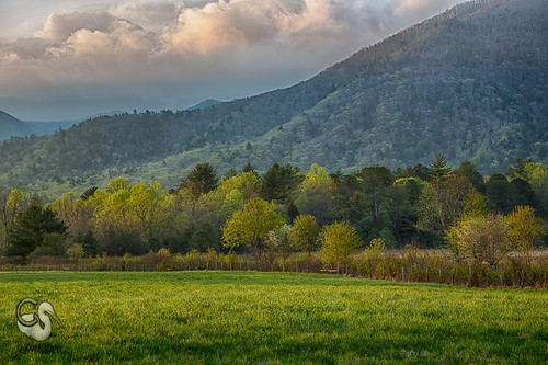 trees green clouds sunrise tn tennessee smokies smokymountains greatsmokymountains cadescove earlymorninglight canon5dmkiii endlessreach1 carlsshaw carlshawphotography