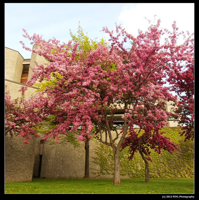 Blossom at Trent