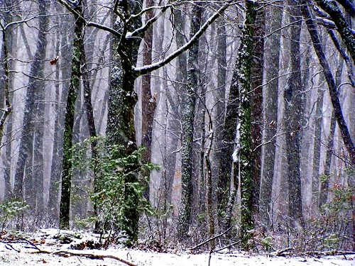 trees winter snow cold nature weather forest dark season landscape virginia woods scenery moody bare deep falling robertfrost limbs trunks lovely leafless poetical boles charlottecourthouse charlottecounty