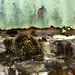 mossy metal by curlsdiva