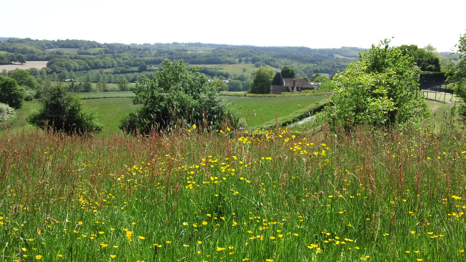 Picnic field Burwash 'Buttercups & Daisies'