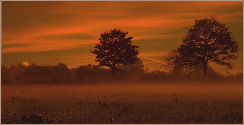 trees summer sky colour field fog sunrise canon