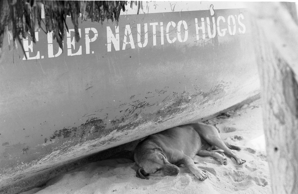 dog laying under boat sleeping playa blanca.jpg