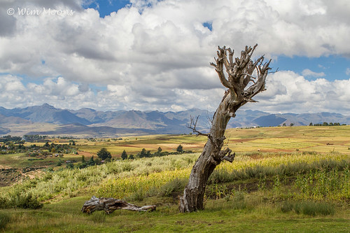 africa sky tree clouds lesotho