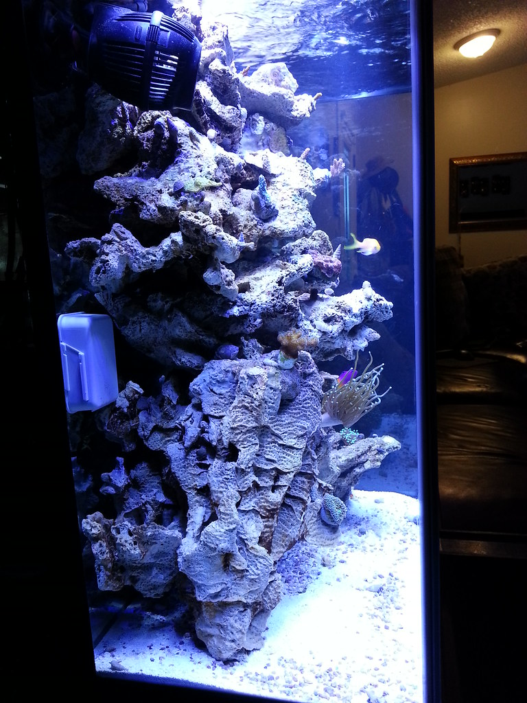 Freshwater fish tank alkalinity - Although It Could Also Have Something To Do With My Tank Only Being A Month Old Too Lol