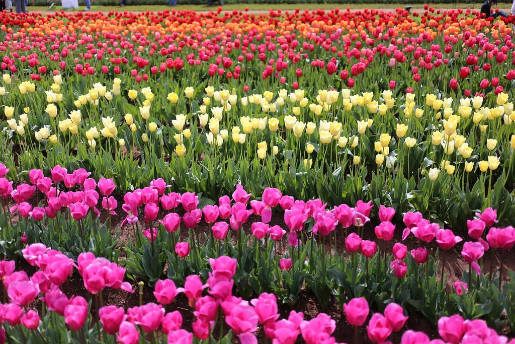 IMAGE: http://farm8.staticflickr.com/7333/10019171783_919fe0bd61_b.jpg