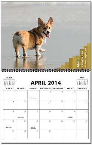 Buy Now! http://www.cafepress.com/corgibutts.987725869