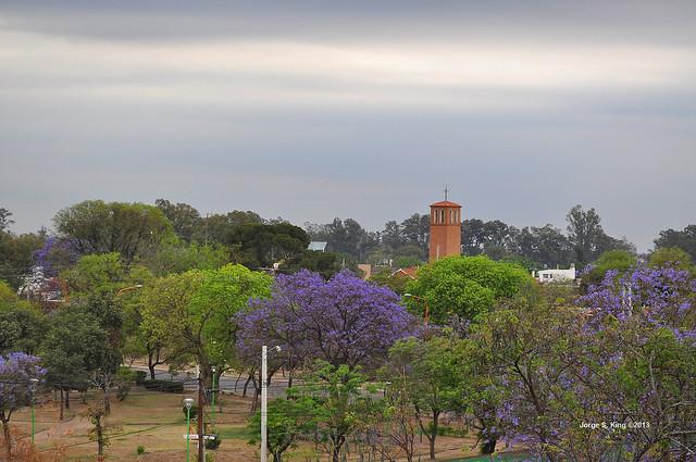 Jacarandá 2013