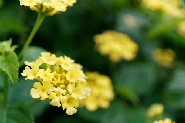 花とサボテン