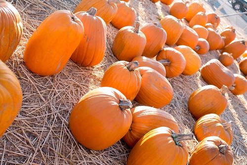 pumpkinpatch08
