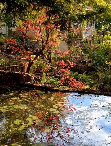 applehill pond classiccar