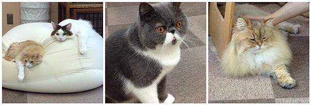 Cat Montage 2