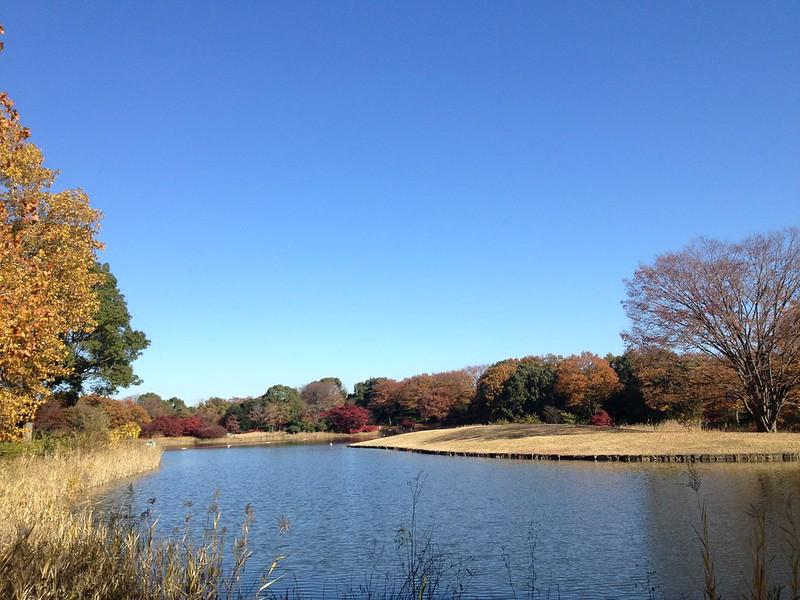 昭和記念公園 Showa Kinen Park-0004