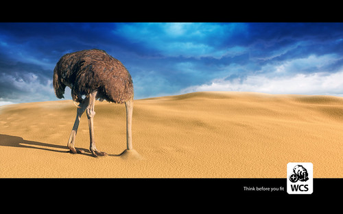WCS Ostrich Sand Wallpaper