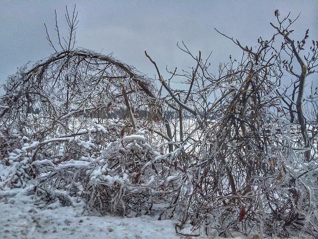 Southern Ontario Ice Storm 2013