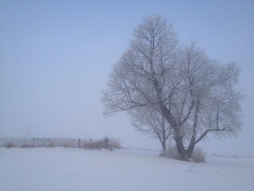 Hoar Frost - Oneco, Illinois