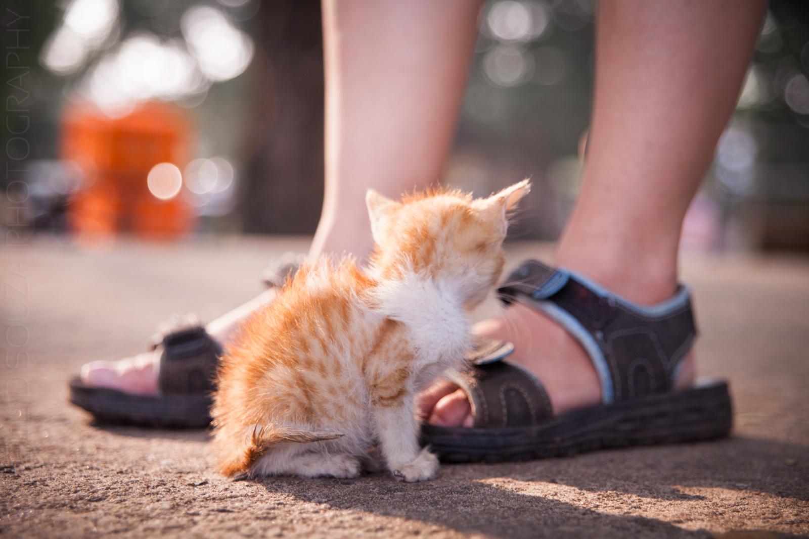Kitten in the sunlight
