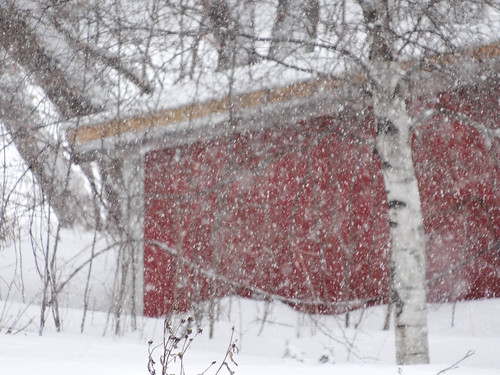 farmette winter-18.jpg