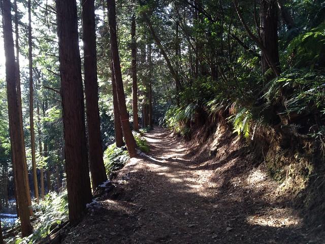 多度山 瀬音の森コース 登山道