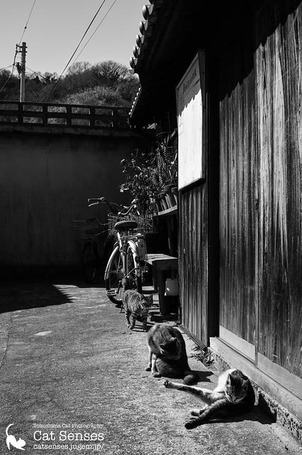 Kagawa Cat #012
