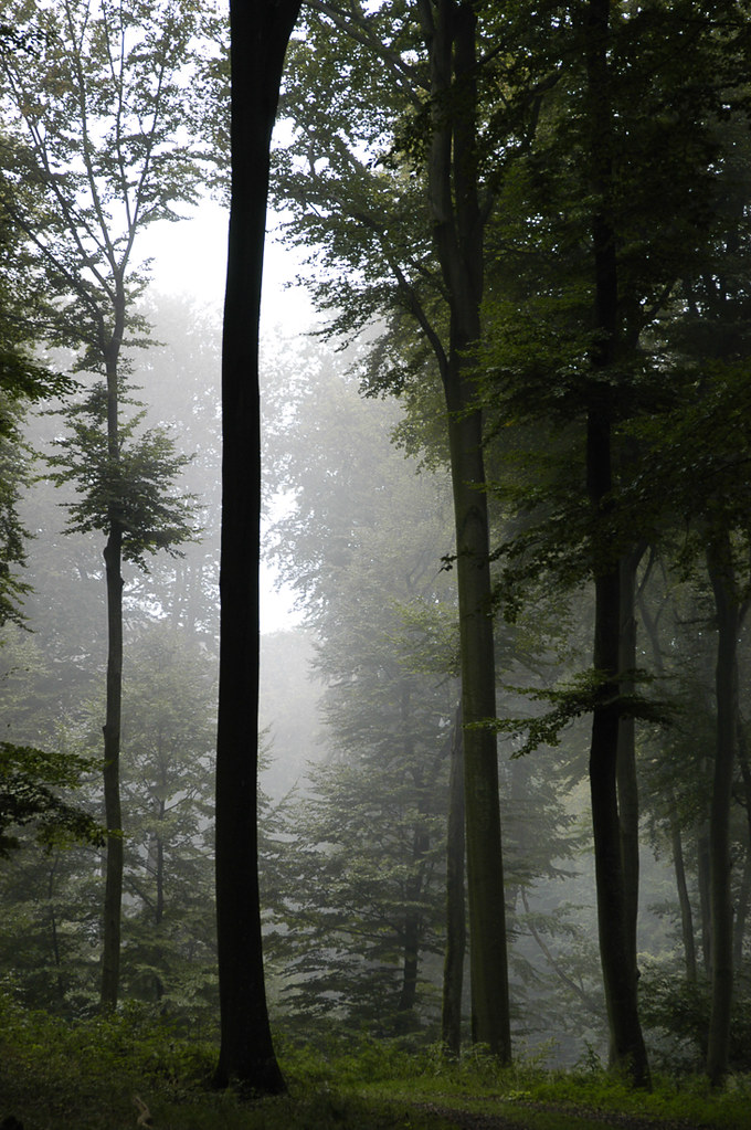 Tree, Luxemburg, 2004